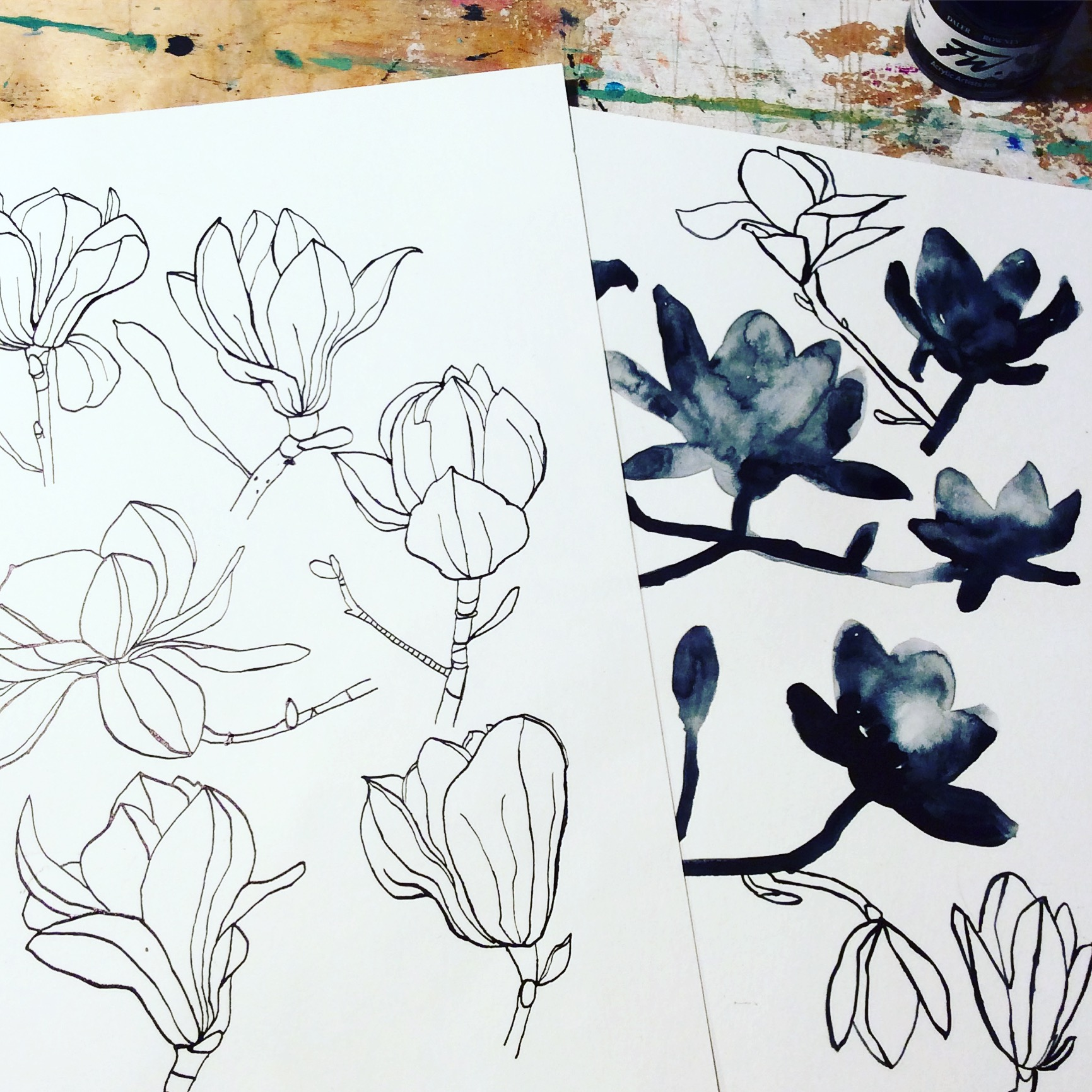 magnolia studis